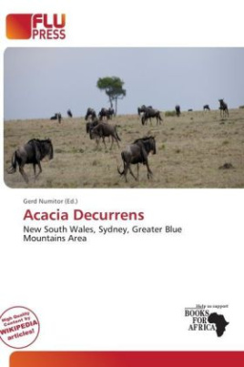 Acacia Decurrens
