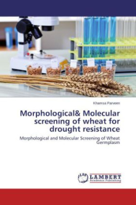 Morphological& Molecular screening of wheat for drought resistance