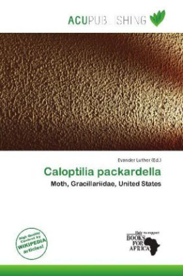 Caloptilia packardella