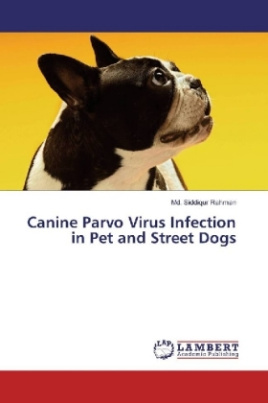 Canine Parvo Virus Infection in Pet and Street Dogs