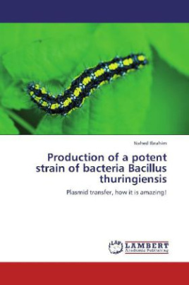 Production of a potent strain of bacteria Bacillus thuringiensis